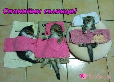 Сладки котенца за сладки сънища