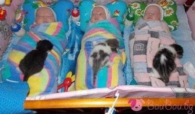 Спящи бебоци - от всеки вид по 3 екземпляра