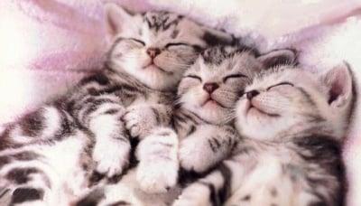Тройно пухкаво заспиване