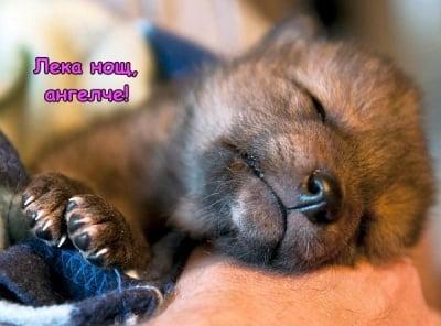 Спящо лисиче