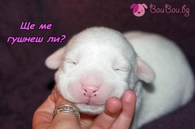 Спящо розово носленце