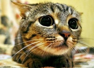 Стрес на котката