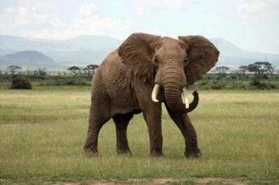 22 Септември - Световен ден за защита на слоновете