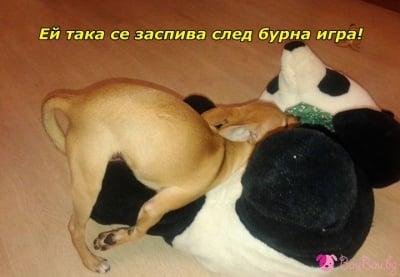 В поза за сън :-)