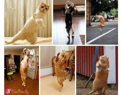 Хайде да потанцуваме!