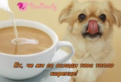 Топло сладко кафенце