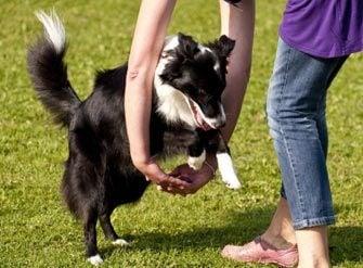 Тренировки и обучение на кучето