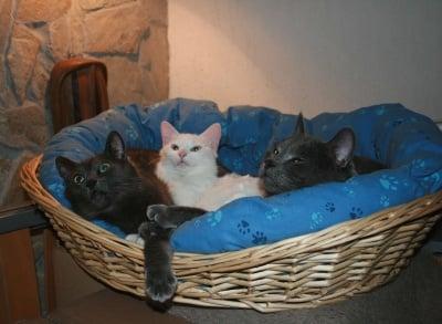 моите три красиви котки