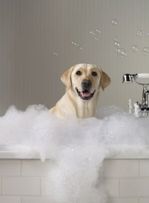 Трябва л да къпем кучето