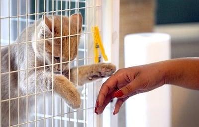 Търсят се доброволци за помощ в малък котешки приют