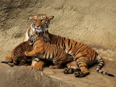 Масово се убиват животни в зоопарковете