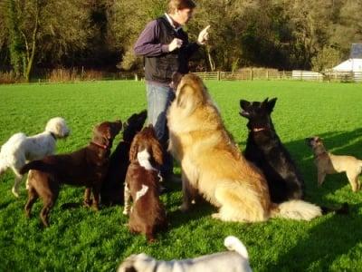 Училище за кучета