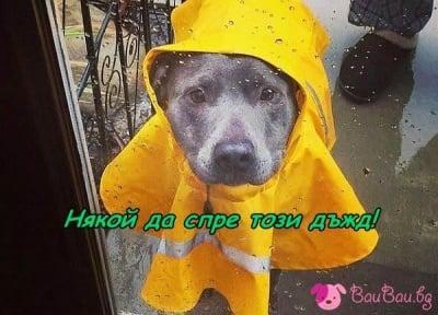 Вали, вали ...
