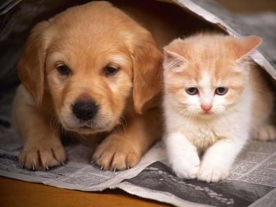 Неща, които вероятно не знаете за ноктите на кучето и котката