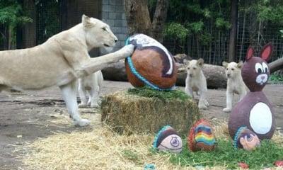 Великден в Зоопарк в Буенос Айрес