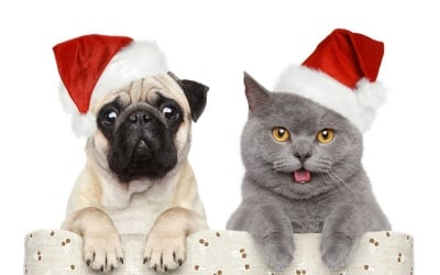 Днес е Коледа!