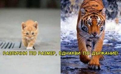 Всички котки са ...