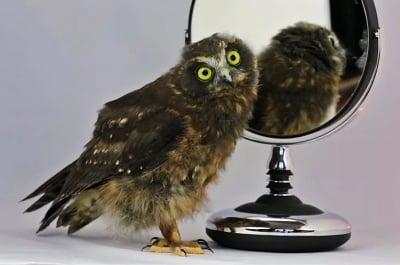 Забавен танц на малка совичка пред огледалото