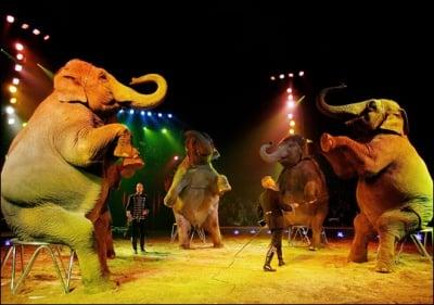 От догодина се забраняват дивите животни в цирка