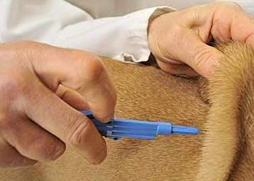 Задължителен чип за всички кучета в Пловдив до 30 септември 2012 г