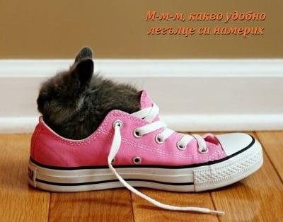 Пухче в обувка