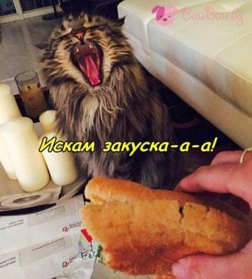 Кой иска закуска?