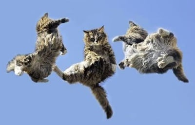 Защо котките падат винаги на краката си?
