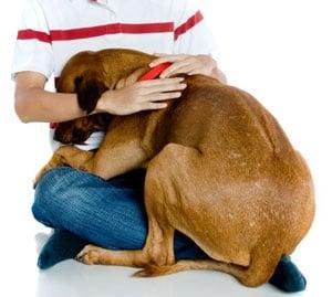 Защо кучетата се страхуват от гръмотевици