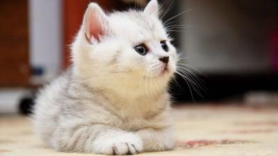 Защо обичаме котките?