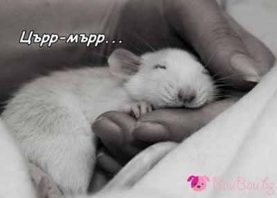 Заспиваме нежно ...