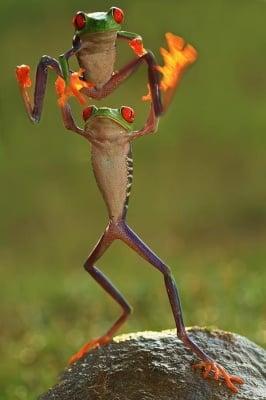 Зелените жабки в скок