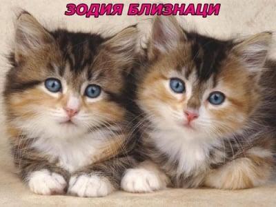 Зодия близнаци