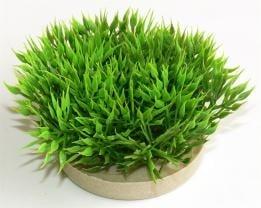 """""""Green Moss"""" - Изкуствено растение за аквариум"""