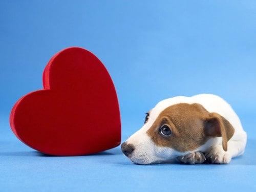 Изследване на Сърдечно - съдовата система при кучето