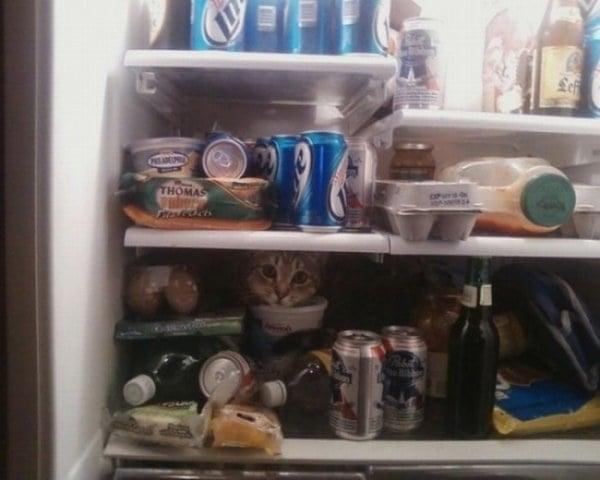 Котка в хладилник