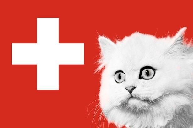 Ядене на котки в Швейцария