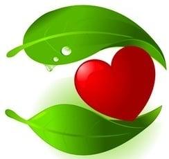 Растения, действащи върху Сърдечно - съдовата система при животните