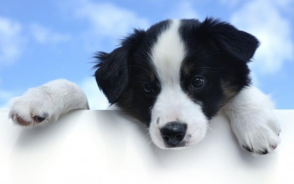 Ротавируси при кучетата