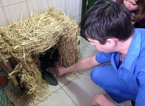 Украинец спаси бобър от одиране, откупва го от бракониери