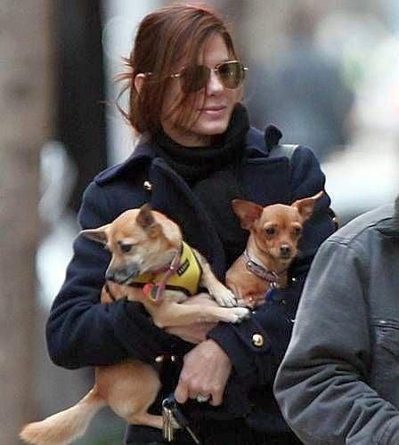 Сандра Бълок с две кученца
