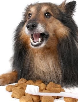 Стоматит при кучето