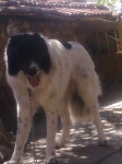 Нашият красавец - Арчи