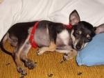 Спящ Любимец Роки