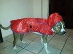 Томи с дъждобран