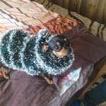 моето малко и палаво куче