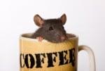 Нестандартно кафе