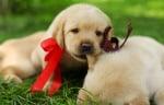 Как да изберете кученце, което е подходящо за вас?