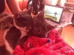Рони и Кити