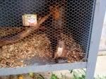 Читател сигнализира за ужасяваща гледка - катерички, държани в клетки за забавление на туристите (снимки)