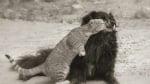 Котка целува куче